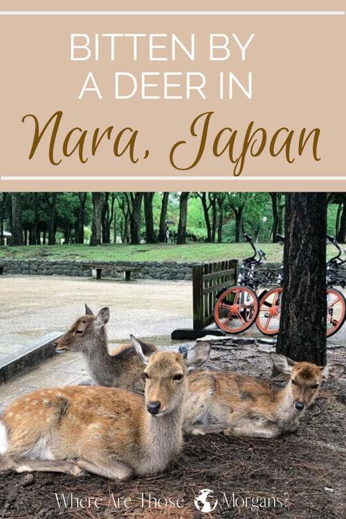 avoid being bitten by a deer Nara Pinterest graphic