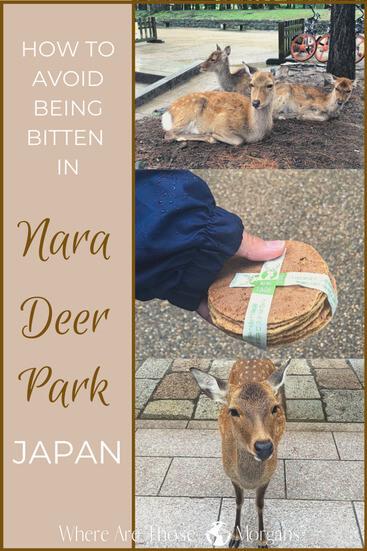Bitten by deer nara pinterest graphic