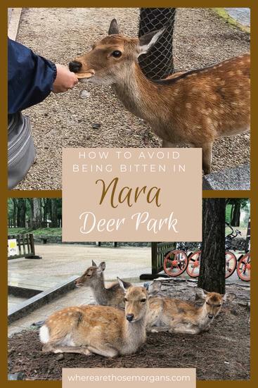 nara bitten by a deer pinterest graphic