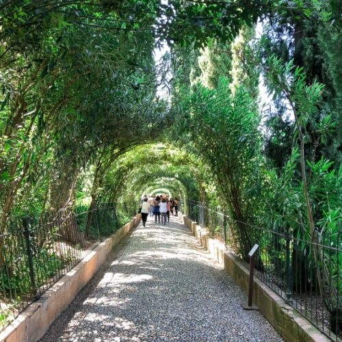 gardens and trees at the Alhambra