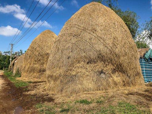 Huge hay bails filled with chicken coops in rural Vietnam