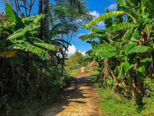 Narrow dirt path running through green vegetation in Vietnam