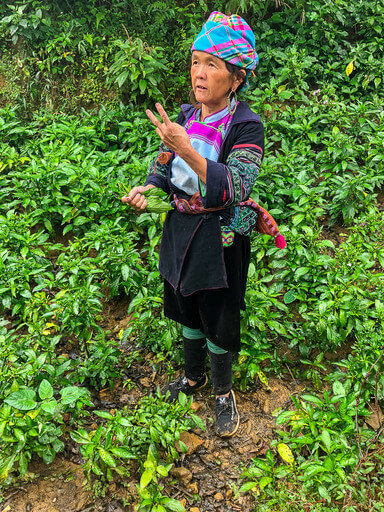 sapa guide with indigo plant