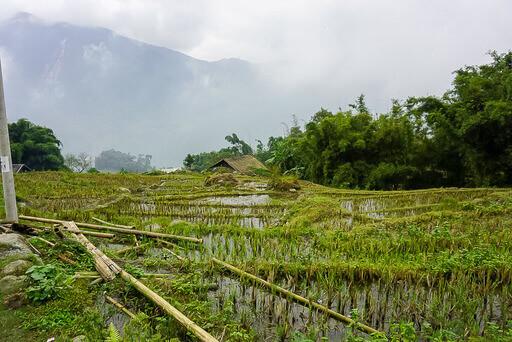 green fields waterlogged and dark clouds in sapa vietnam