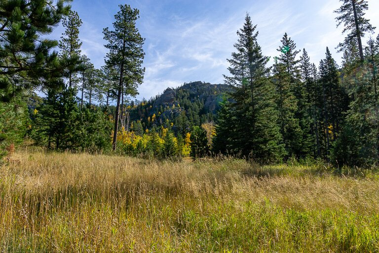 Beautiful scenery black hills national forest