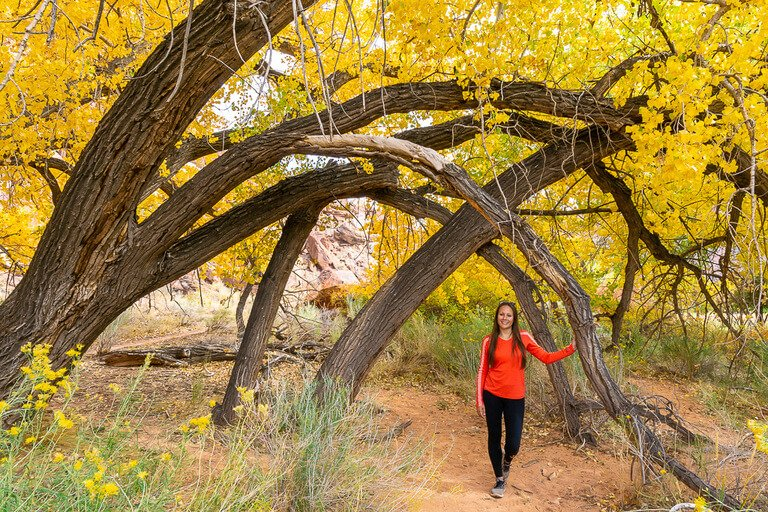 Kristen stood underneath overhanging tree branches and gorgeous yellow leaves Capitol Reef photography