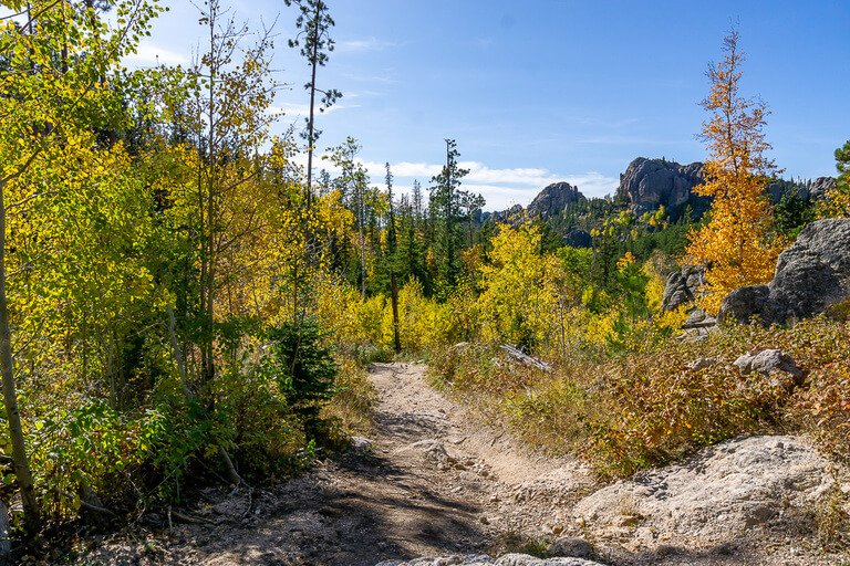 Hike trail in shadow with gorgeous colors black hills forest