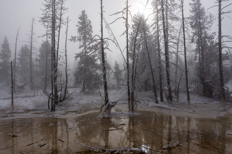Yellowstone dead trees in eerie mist with sun blocked