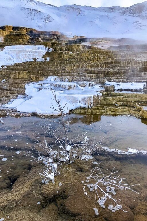 Mammoth hot springs terraces in winter