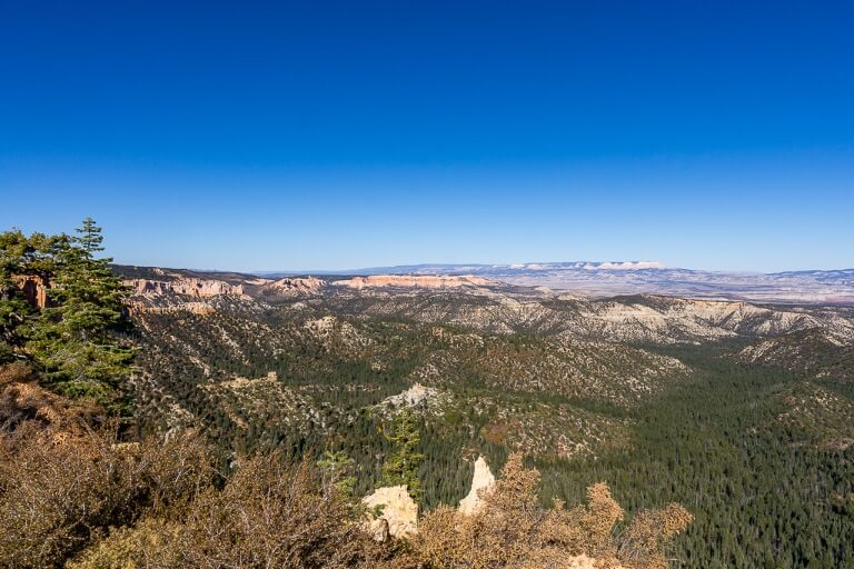 Ponderosa point at the end of 18 mile scenic drive at Utah national park