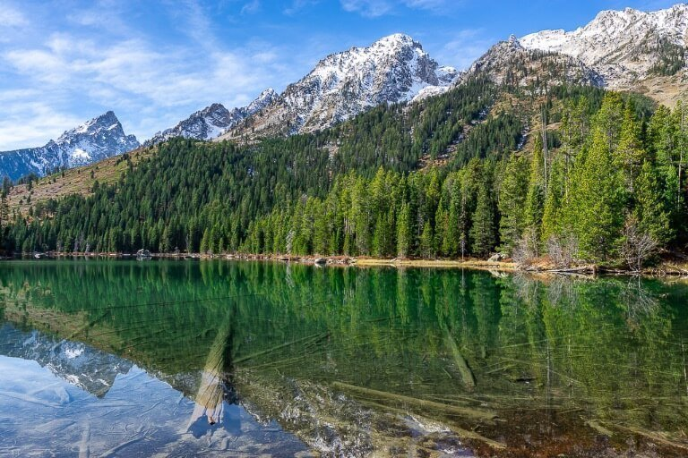 Jenny Lake edge with logs reflecting underneath green water and mountains